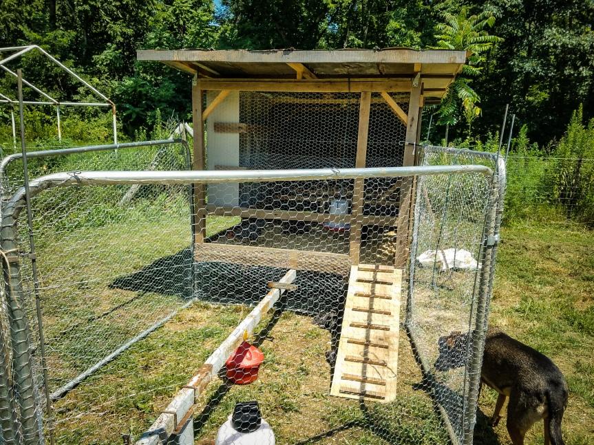 ChickenArk-4.jpg