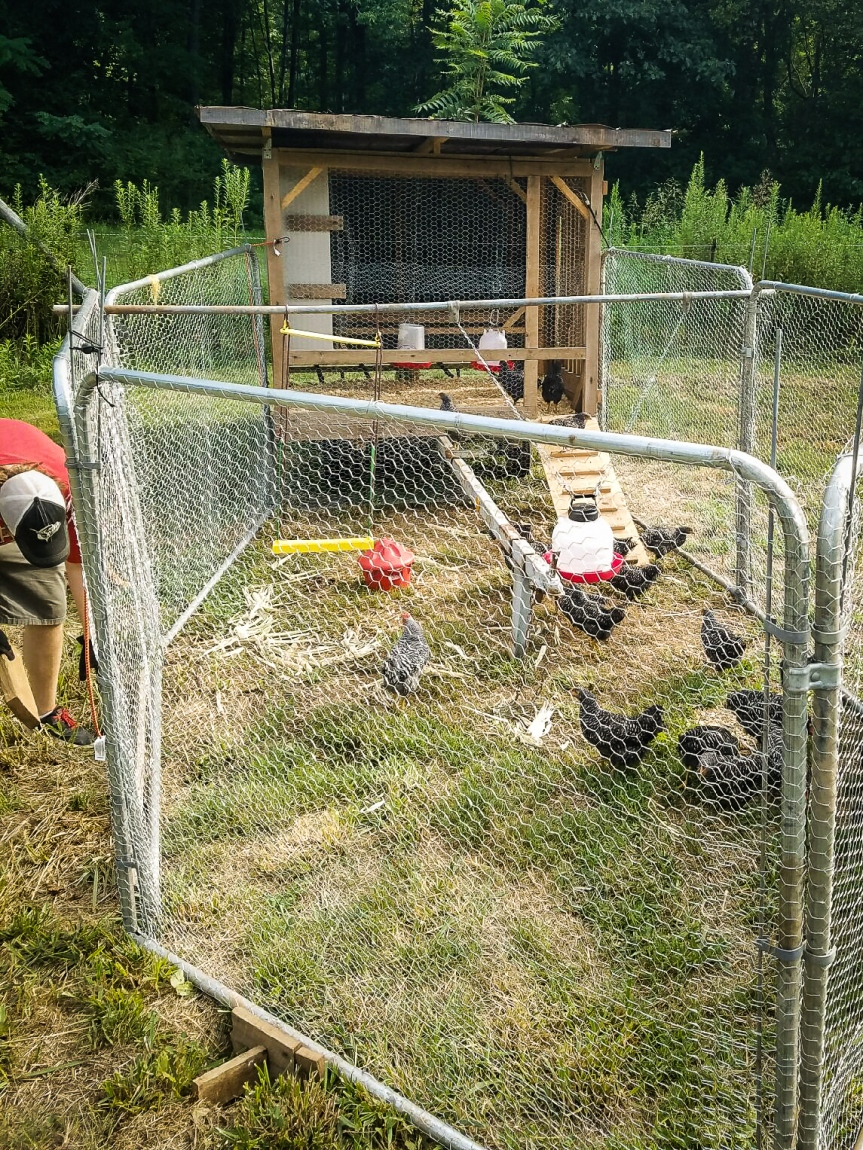 ChickenArk-5.jpg